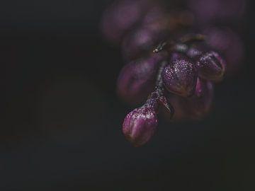 Blütenknospen von Diane van Veen