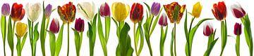 Tulpen van Henk Leijen