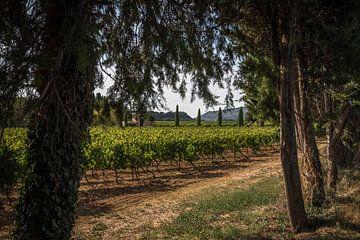 Wijnvelden sur Johan Vet