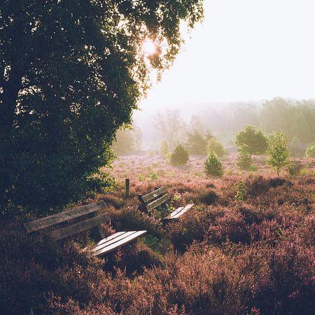 Rustige zonsopkomst op de Veluwe