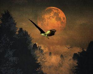 Valken op jacht tijdens de avond