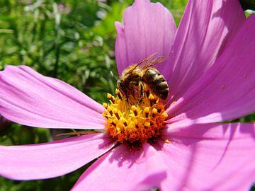 Bloemen en bijtjes van Jellie van Althuis