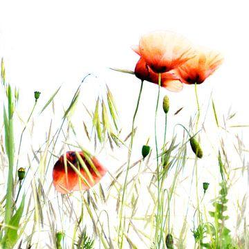 klaprozen in het veld 2 van Anouschka Hendriks