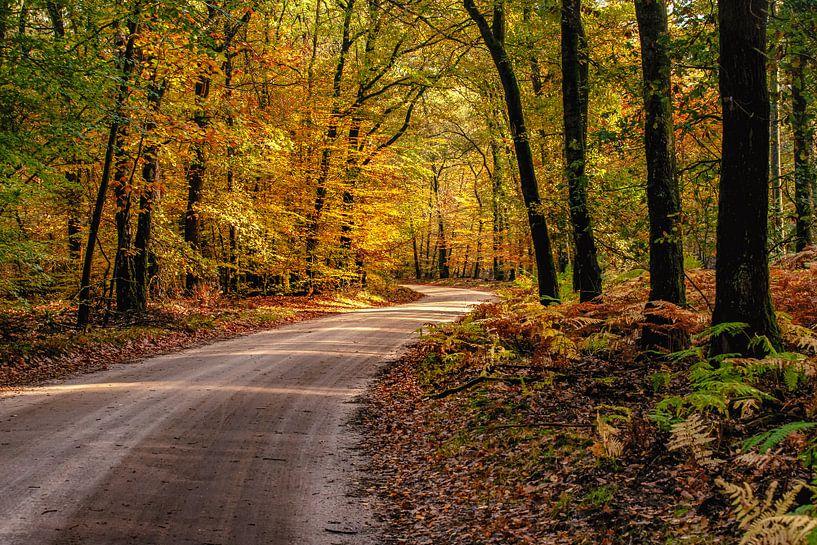 Oranje geel gekleurd herfstbos met zandweg van Fotografiecor .nl