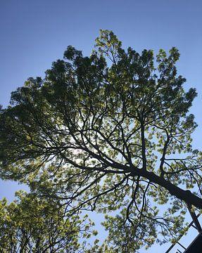 Zon in de bomen van See Like Me