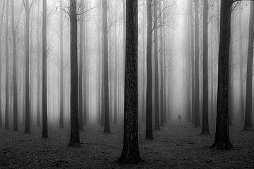 Dans un brouillard, Jochen Bongaerts sur 1x