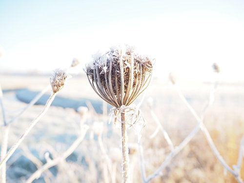 Winter wonderland van Cindy Arts