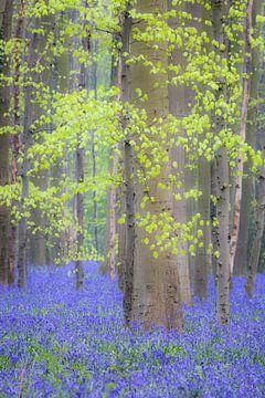 Spirits of the Forest von Dion van den Boom