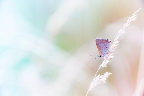 Kleine vuurvlinder in pastel tinten achtergrond