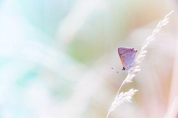 Kleine vuurvlinder in pastel tinten achtergrond van Mark Scheper