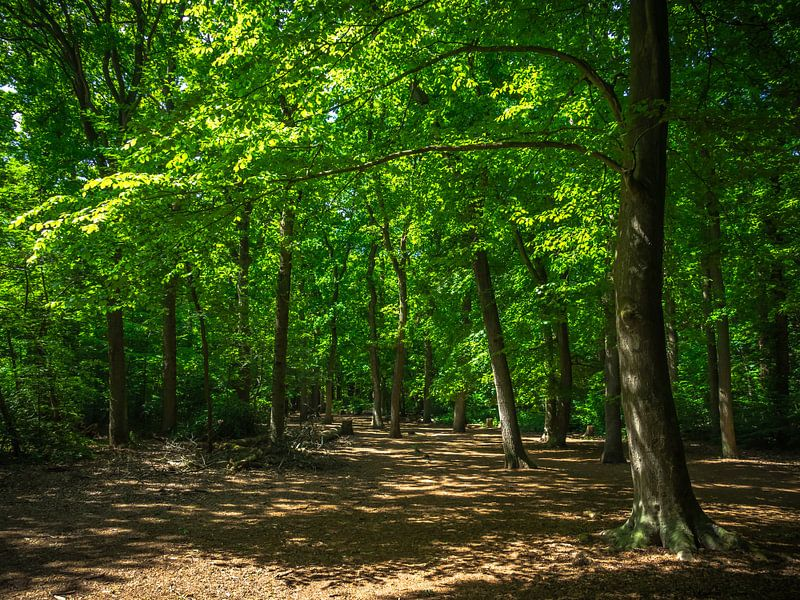Grüner Waldweg von Martijn Tilroe