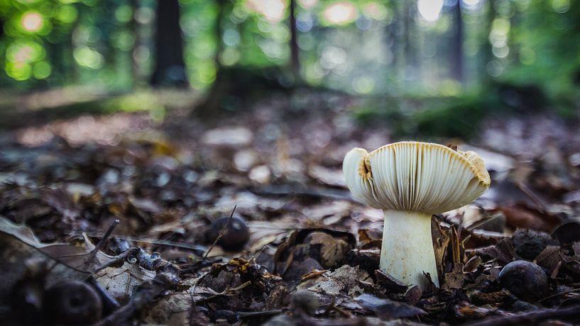 Autumn in the forest sur Martzen Fotografie