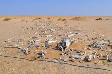 bleiche Knochen in der Wüste von Achim Prill