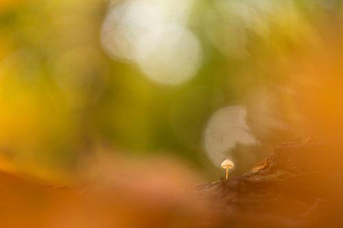 paddenstoeltje in de zon