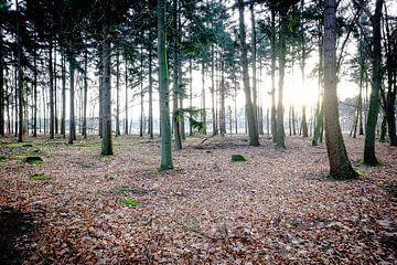 Licht door de bomen von H Verdurmen