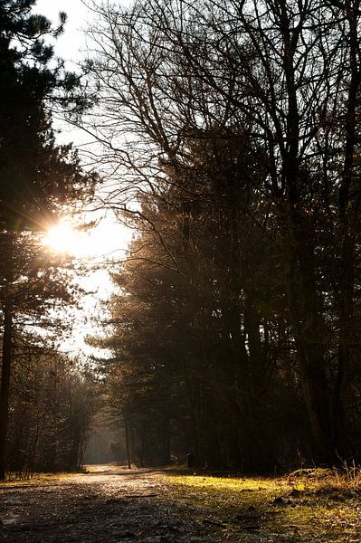 Zon in het bos van Jeroen Wijnands