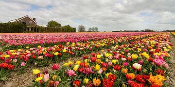 Hollands bonte kleuren palet van Hans Brinkel