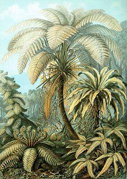 Haeckel Filicinae van Marieke de Koning