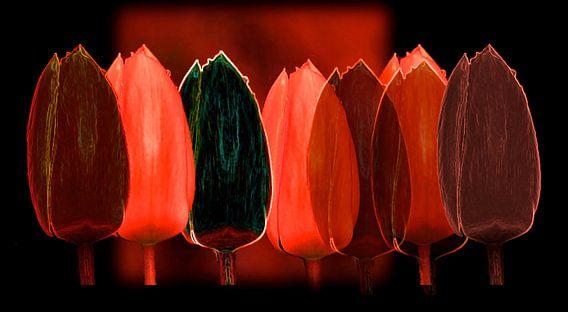 Tulpen in rood-zwart van Gerda H.