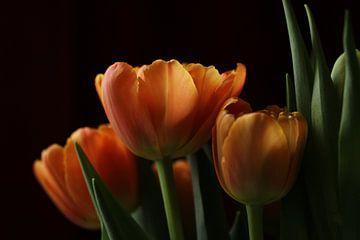 Rosen im Morgenlicht von Pim van der Horst