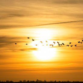Door de zon! van Ton Drijfhamer