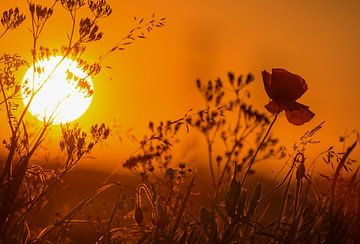 Zonsondergang boven de berm. von Michel Knikker
