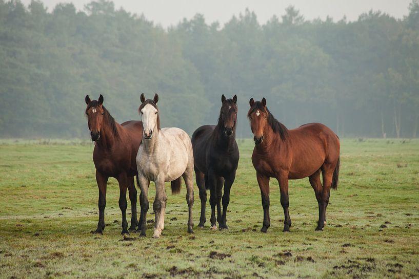Nieuwsgierige paarden (II) sur Anneke Hooijer