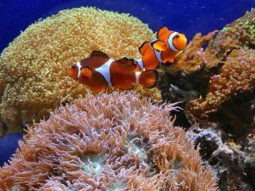 Aquarium van Edgar Schermaul