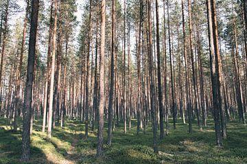 Dennenbos in Zweeds Lapland van Kimberley Jekel