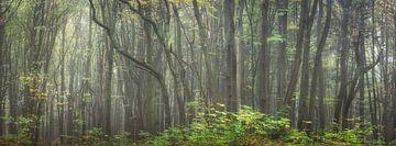 Majestueus bos van Tobias Luxberg