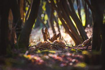 Zwei Rehe von Andy van der Steen - Fotografie