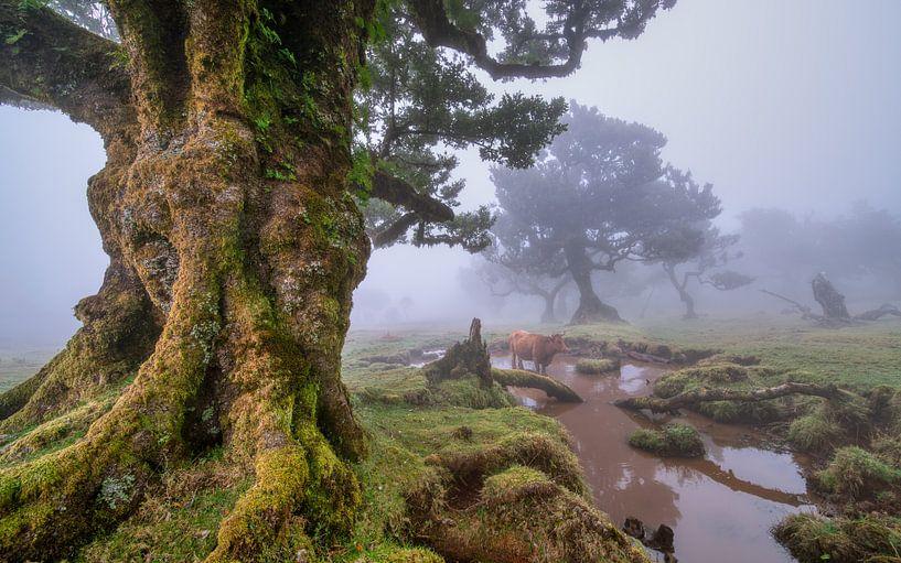 Lord of the Rings landschap.... van Peter Korevaar