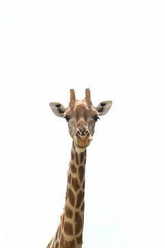 Lange nek en hoofd van giraf van Bobsphotography