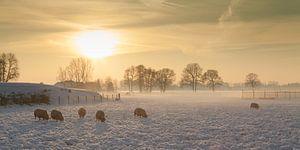 Gouden winterlandschap van