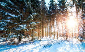 Winterwunderland von Richard Driessen