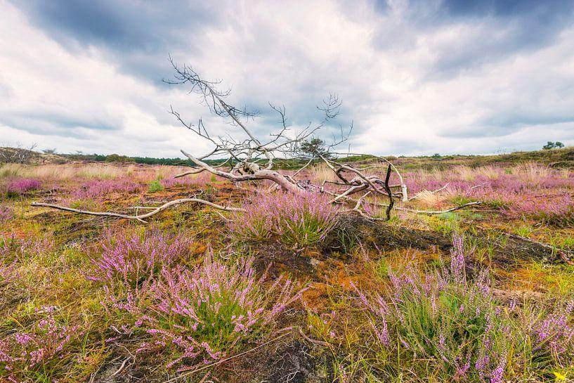 Heide in de duinen van Fotografie Egmond