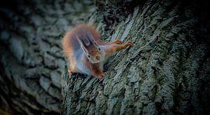 Grimper avec l'écureuil :-) sur Henk v Hoek