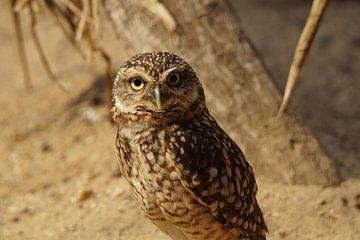 Owl van Lennard Kazen