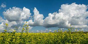 Groenbemesting met blauwe wolkenlucht..