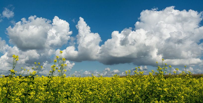 Groenbemesting met blauwe wolkenlucht.. van Leo Langen