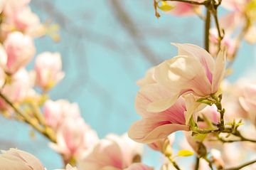 Lentebloesem magnolia 3 van Joske Kempink