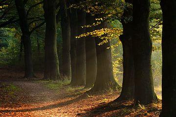 Die goldene Stunde im Wald von Samantha van Leeuwen