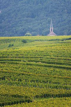 Kerkje tussen de druivenvelden van Steve Mestdagh