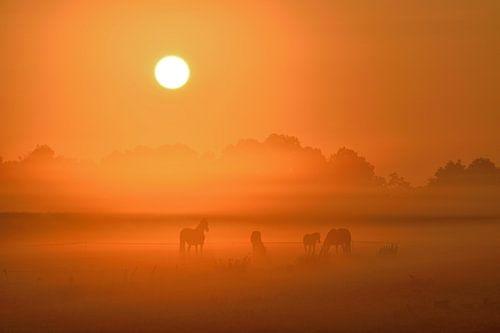 Paarden in mist van Yorben  de Lange