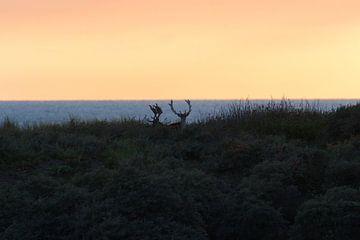 Herten bij zonsondergang van Anne Zwagers