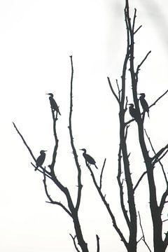 Vögel im Baum von Marcha Meijer