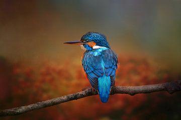 Foto Van Een Ijsvogel In Herfst Landschap van Diana van Tankeren