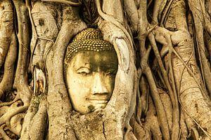 Budda in tree