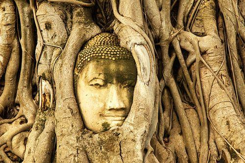 Budda in tree van