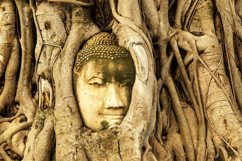 Budda in tree van Ilya Korzelius